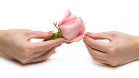 Красивые руки Стоковое Фото