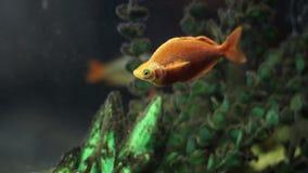 Красивые рыбы в аквариуме акции видеоматериалы