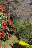 Красивые сад и гора цветков Стоковое Изображение