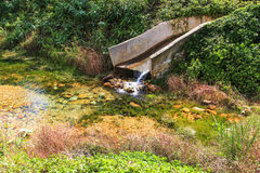 Красивые сад и пруд воды стоковые фотографии rf