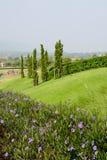 Красивые сады цветка и дерева на холме Стоковое Фото