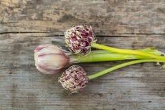 Красивые семена цветка чеснока и головы чеснока лежат на деревянном столе outdoors Стоковое Изображение