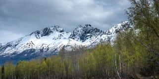 Красивые скалистые горы в цветах весеннего времени стоковые фото