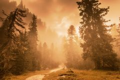 Красивые сосновый лес и солнечные лучи Стоковое Изображение