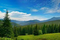 Красивые сосны на горах предпосылки высоких Стоковые Изображения