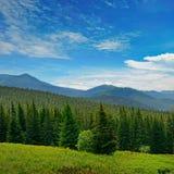 Красивые сосны на горах предпосылки высоких Стоковое Изображение RF