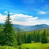 Красивые сосны на горах предпосылки высоких Стоковое Изображение