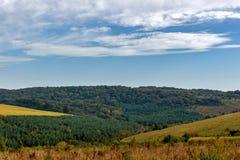 Красивые сосны на горах предпосылки высоких carpathians Стоковая Фотография RF