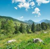 Красивые сосны на горах предпосылки Стоковые Фото