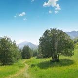 Красивые сосны на горах предпосылки Стоковое Фото