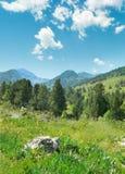 Красивые сосны на горах предпосылки Стоковое Изображение RF