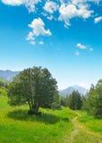 Красивые сосны на горах предпосылки Стоковое фото RF