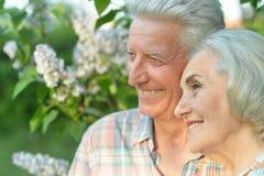 Красивые старшие пары представляя в парке лета стоковое изображение