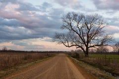 Красивые сумерки и большое обнаженное дерево проселочной дорогой стоковая фотография rf