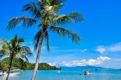 Красивые тропические пальмы кокоса на пляже Таиланда острова Samui, известного назначения каникул Стоковые Изображения RF