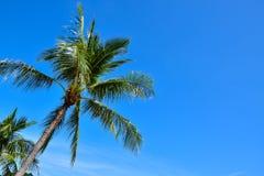Красивые тропические пальмы кокоса на пляже Таиланда острова Samui, известного назначения каникул Стоковое Изображение