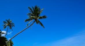 Красивые тропические пальмы кокоса на пляже Таиланда острова Samui, известного назначения каникул Стоковые Фотографии RF