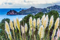 Красивые тростники вдоль берега океана стоковое изображение rf