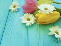 Красивые тюльпаны торжества цветеня хризантемы приправляют день матерей приветствию предпосылки, на голубой деревянной предпосылк Стоковая Фотография RF