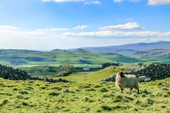 Красивые участки земли Йоркшира благоустраивают сногсшибательный зеленый цвет Rolling Hills Европу Великобритании туризма Англии  Стоковые Фото