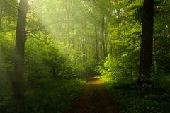 Красивые лучи весны Стоковое Фото