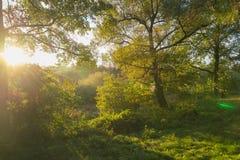 Красивые лучи солнца утра в лесе осени Стоковая Фотография RF