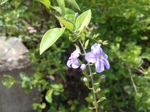Красивые фиолетовые крошечные цветки с зеленой предпосылкой нерезкости стоковые фото
