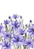 Красивые фиолетовые цветки с зелеными стержнями и листья на белой предпосылке флористическая картина безшовная самана коррекций в иллюстрация штока
