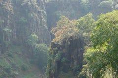 Красивые холмы с деревьями Стоковые Фото
