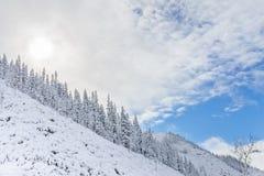 Красивые холмы taiga на Дальнем востоке России в в начале октября Taiga в зиме красивейшая природа Погода SFrosty Стоковое Изображение