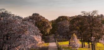 Красивые цвета осени, дороги в саде стоковая фотография rf