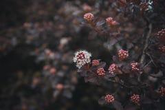 Красивые цветки весны стоковое изображение