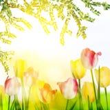 Красивые цветки весны. EPS 10 Стоковые Изображения RF