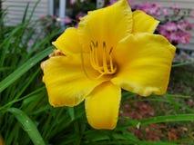 Красивые цветки вне сегодня стоковая фотография rf