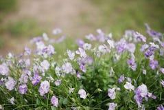 Красивые цветки в поле Стоковые Изображения RF