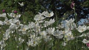 Красивые цветки в саде во время летнего дня видеоматериал