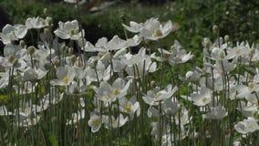 Красивые цветки в саде во время летнего дня акции видеоматериалы