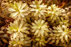 Красивые цветки в солнечном дне Стоковая Фотография