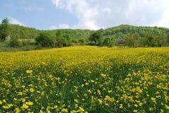 Красивые цветки в Турции Стоковое фото RF