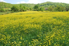 Красивые цветки в Турции Стоковые Изображения