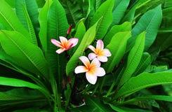 Красивые цветки в Чандигархе Индии стоковое фото