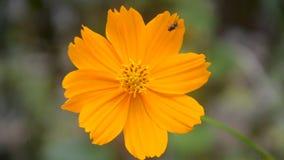 Красивые цветки двигают в ветер сток-видео