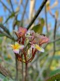 Красивые цветки для абстрактных предпосылок стоковые фото