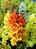 Красивые цветки других цветов, Литва Стоковое Изображение
