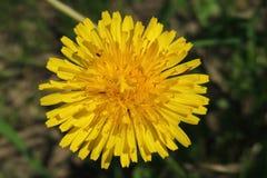 Красивые цветки делают вашими глазами яркие цвета Стоковое Изображение RF
