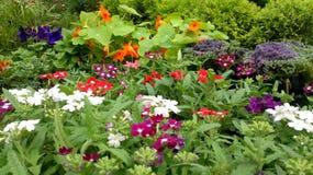 Красивые цветки заводов питомника стоковое изображение rf