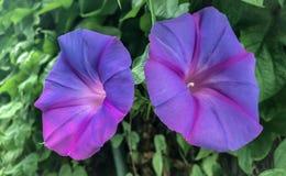 Красивые цветки зацветая на стене garden_VI стоковые изображения rf