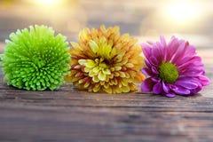 Красивые цветки золот-маргаритки на деревянной предпосылке Стоковое Фото
