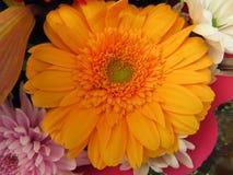 Красивые цветки интенсивных цветов и большей красоты стоковое изображение