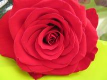 Красивые цветки интенсивных цветов и большей красоты стоковые изображения rf